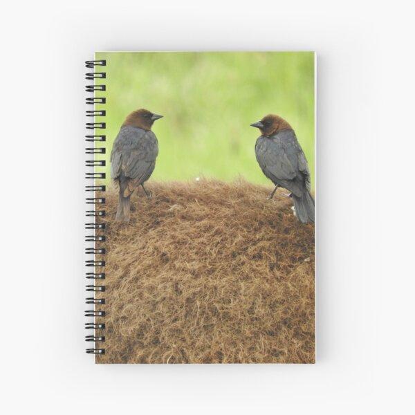 Brown-headed cowbirds Spiral Notebook