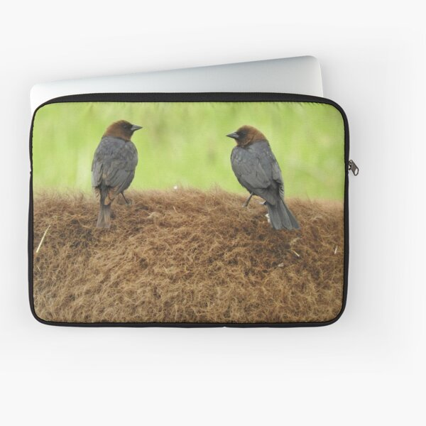 Brown-headed cowbirds Laptop Sleeve