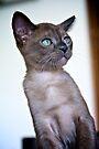 Kitten by Extraordinary Light