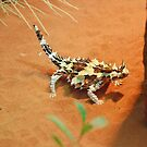 Thorny Devil, Northern Territory, Australia by Adrian Paul