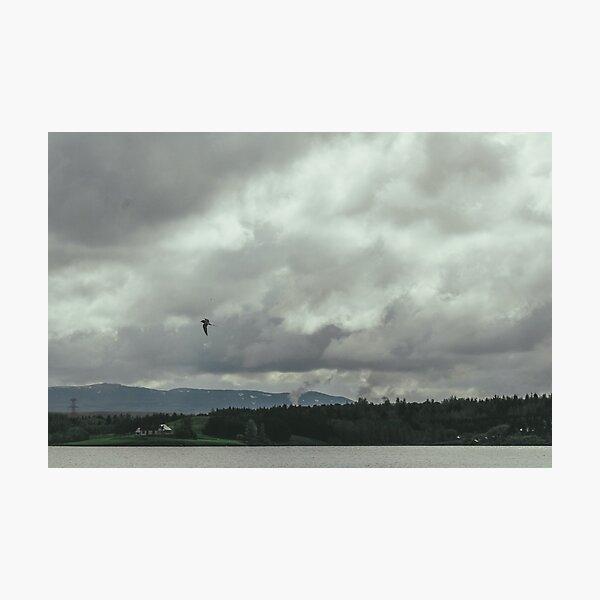 An Arctic Tern Soaring Above Lake Ellidavatn Photographic Print