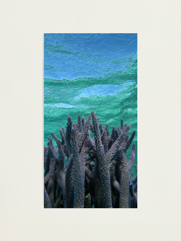 Alternate view of Shades of Blue Photographic Print