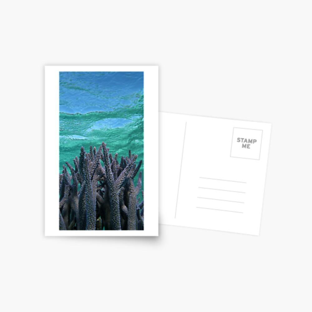 Shades of Blue Postcard