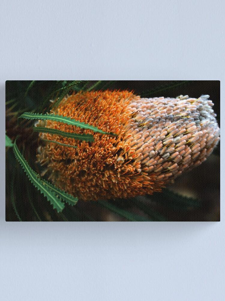 Alternate view of Banksia hookeriana Canvas Print