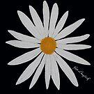 WHITE DAISY BLACK by RoseLangford