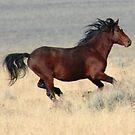 Dark Stallion by Arla M. Ruggles