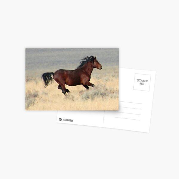 Dark Stallion Postcard