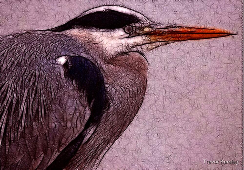 Grey Heron by Trevor Kersley