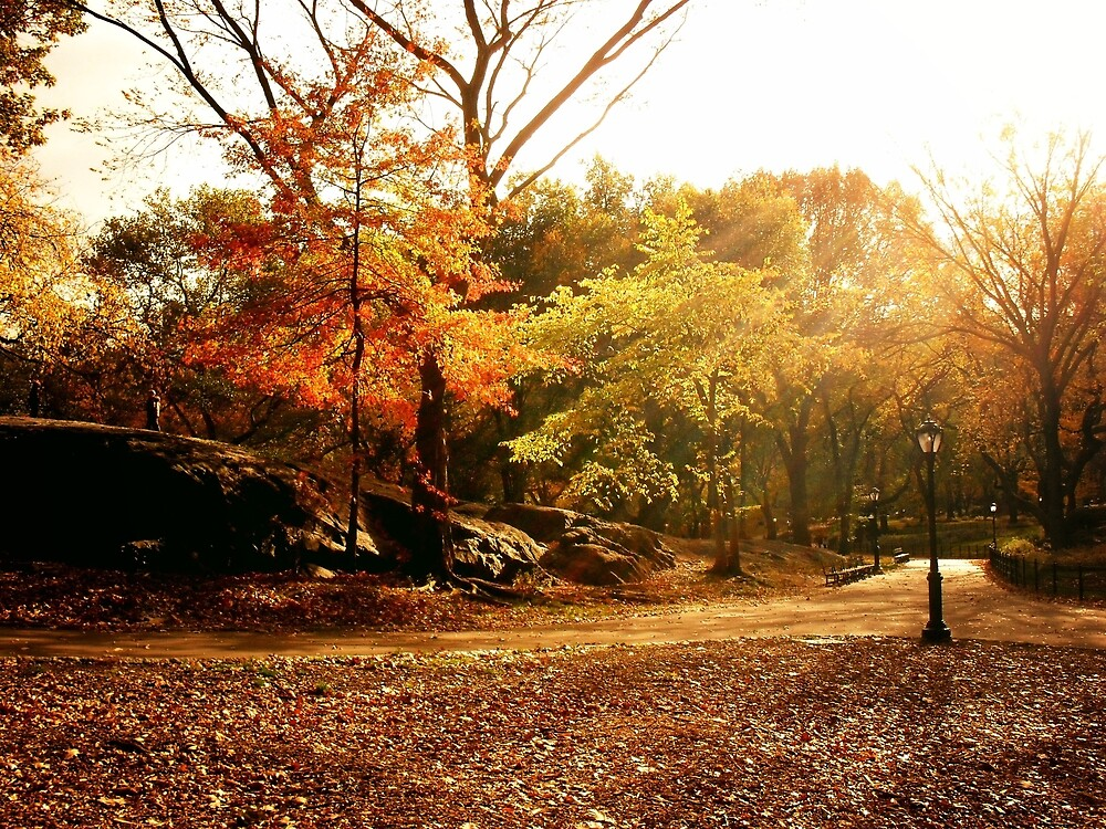 Autumn Light in Central Park - New York by Vivienne Gucwa