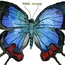 Thecia Coronata (Hewitson's Blue Hairstreak Butterfly) by Carol Kroll