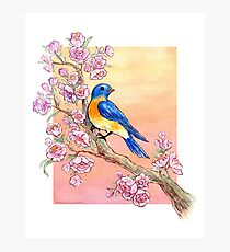 Sweet Little Bluebird Photographic Print