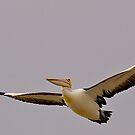 Powerful Pelican, Stormy day, Tooradin, Victoria, Australia. by johnrf