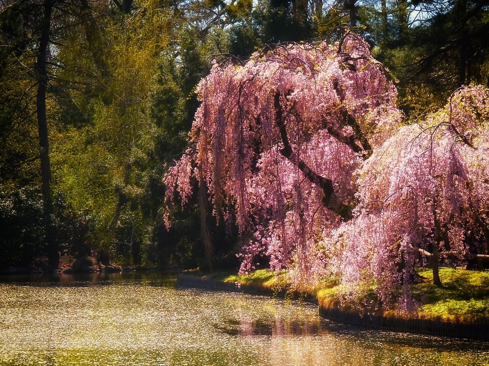 Love Poem - Brooklyn Botanic Garden - New York City by Vivienne Gucwa