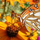 Beautiful Gulf Frittilary Butterfly by catherinemhowl