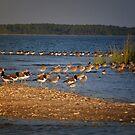 Island Birds by socalgirl