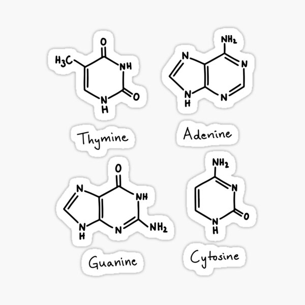 Nucleobases ACTG Adenosine Guanine Cytosine Thymine Sticker