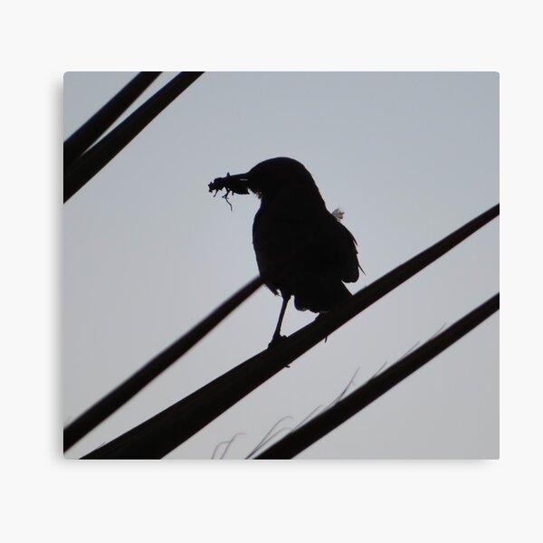 Pájaro e insecto Lienzo