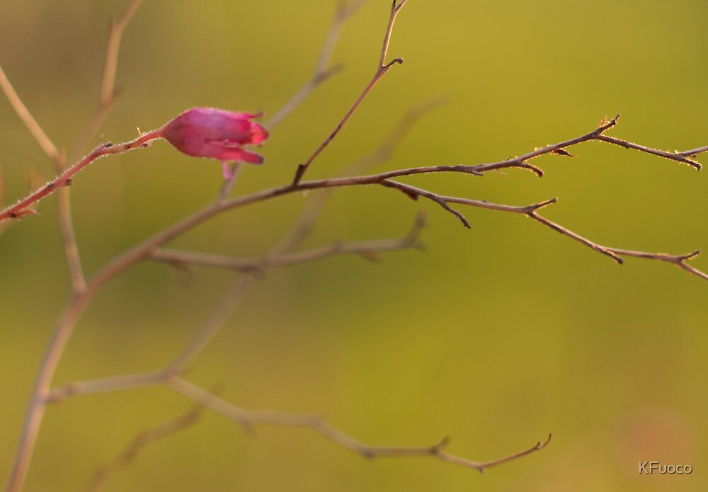 Coral Bell Pink..  by KFuoco