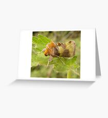 Burnished brass moth Greeting Card