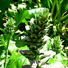 Adelaide Botanic gardens 2010 by Shelleymay