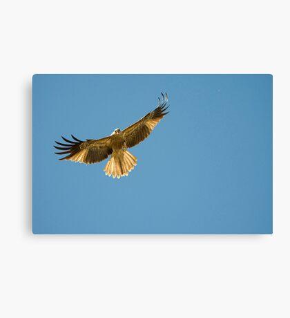 Feeding the Kites - Adelaide river NT Canvas Print