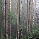 light in mist by TerrillWelch