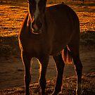 Horse at Sunrise 2 by photograham