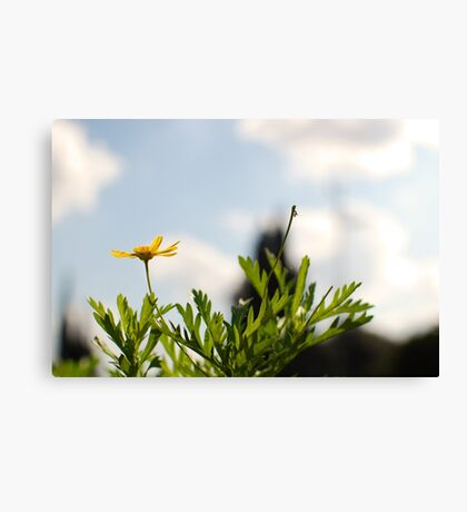 Spring...in the air! Canvas Print