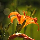 Lilies by Alley Aber
