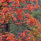 Fall Colors of West Fork by Craig Durkee
