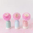 Pastel pink Dahlias pom poms by Zoe Power