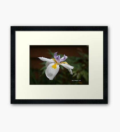 Flower in the Spring by Robyn J. Blackford Framed Print