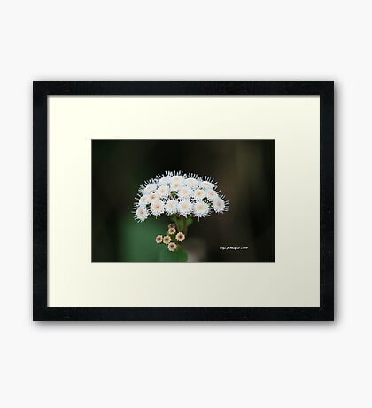 Too Pretty for a Weed by Robyn J. Blackford Framed Print
