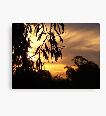 Bush Sunset on the Tweed River. Canvas Print