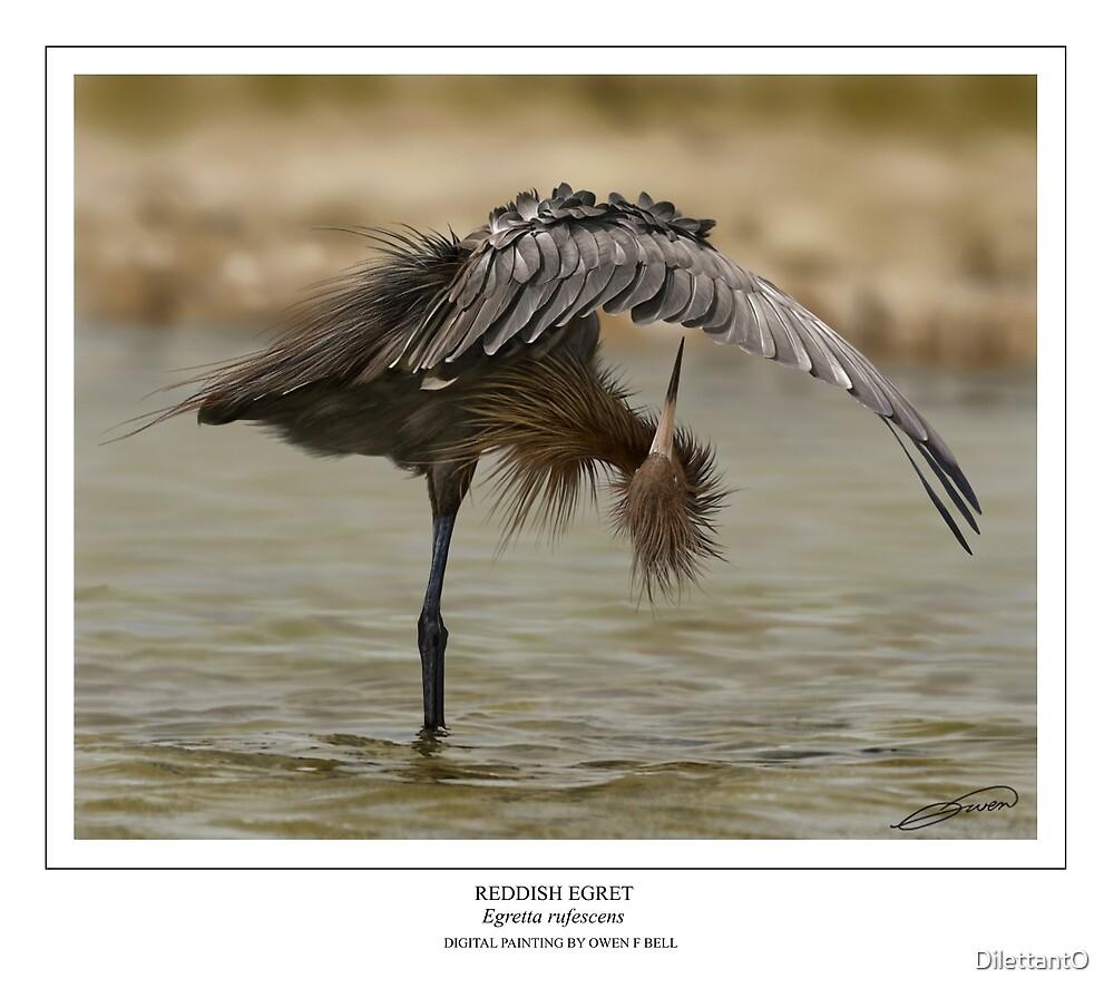 REDDISH EGRET  Egretta rufescens (NOT A PHOTOGRAPH OR PHOTOMANIPULATION) by DilettantO