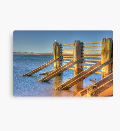 Seagull sitting on Tide fence Canvas Print