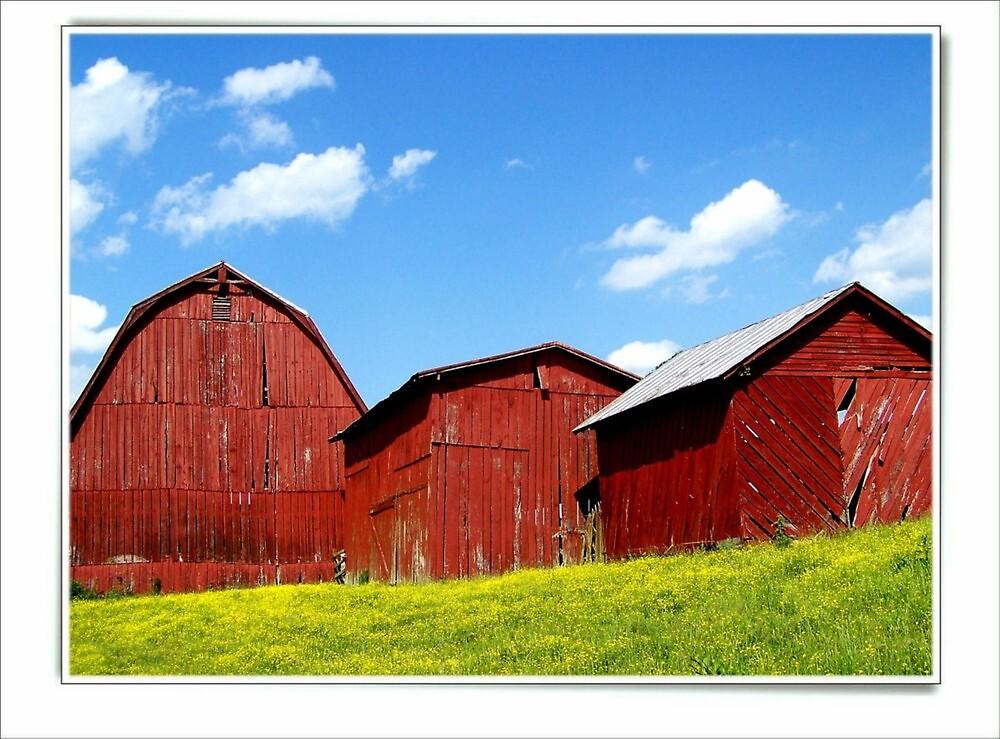 Three Barns by lynell