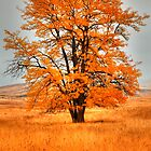 Orange Burst by IdahoJim