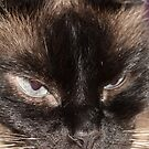Evil kitty by Oceanna Solloway