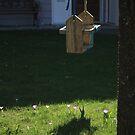 Wooden swing by Oceanna Solloway