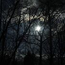 See the sun through the trees by Oceanna Solloway