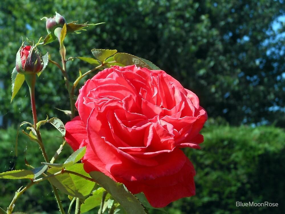 Rose begrüßen zu dürfen von BlueMoonRose
