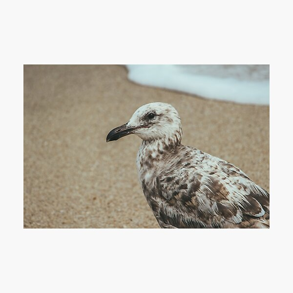 A Seagull Along the Shore Photographic Print