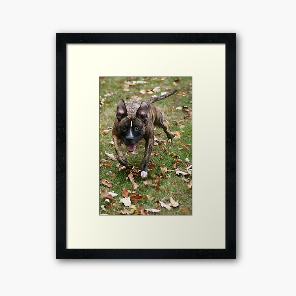 Oh what's that! Framed Art Print