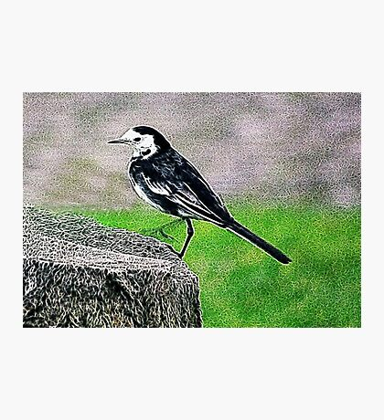 Fractalius Pied Wagtail Photographic Print