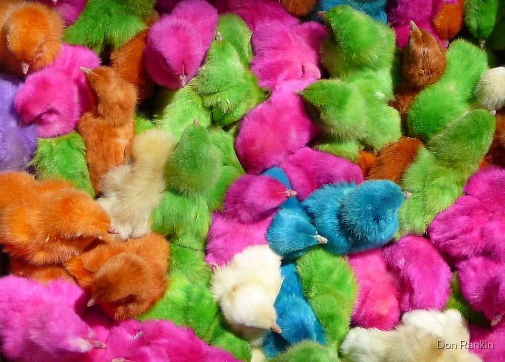Easter Chicks by Don Rankin