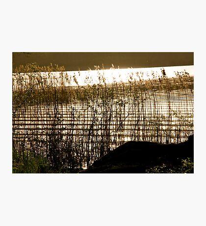 Golden textures Photographic Print