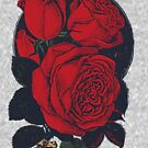 Vintage Roses by Kindan Empire