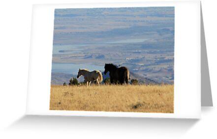 Two Pryor Mountain Wild Horses Enjoying the View by sandyelmore