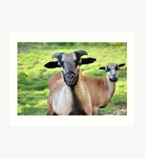 Friendly Animals (Saxony, Germany) Art Print